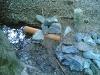 Zulauf Wasserrad 2.jpg